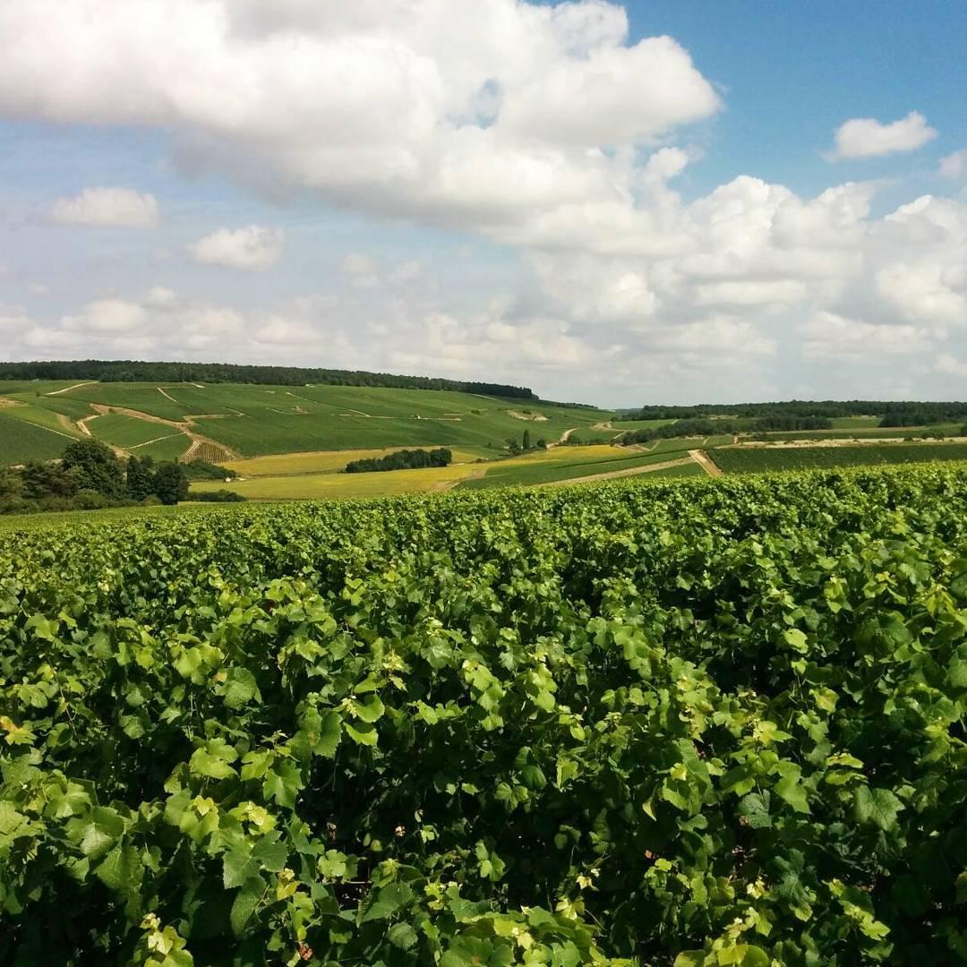 #CotedesBar #Aube #Champagne… + d'infos …